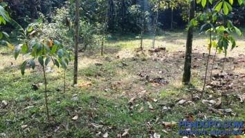 Tanah 9000m Di Jabon Mekar Parung Bogor, Jawa Barat
